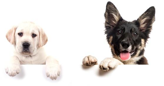 argos_dogs